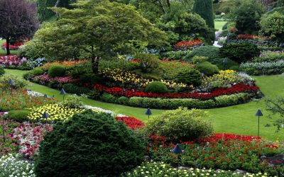 Top Budget-Friendly and DIY Landscaping Tips to Know